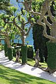 Mediterraner Garten am Lago Maggiore, skuril geformte Platanen am Weg