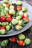 Red and green strawberries on a plate