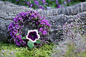 Kranz aus Besenheide und Strandflieder, Petunienblüte als Blickfang
