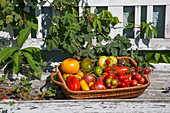 Different types of tomatoes in a basket