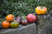 Different types of tomatoes on a stone wall