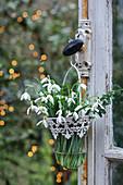 Strauß Schneeglöckchen in nostalgischer Glasvase auf Moos