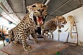 Stuffed leopard and cheetah