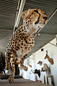 Stuffed cheetah