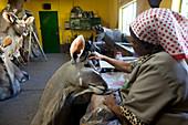 Taxidermy workshop