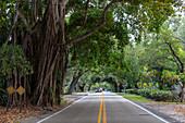 Tree tunnel Florida, USA