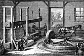 Cider production, 19th century illustration