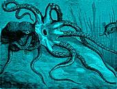 Octopus, 19th century illustration