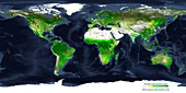 Global atmospheric carbon removal by plants, spring 2000
