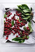 Various sweet cherries (prunus avium) with leaves