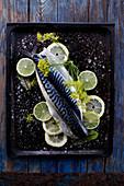 Fresh mackerel with limes and lemons