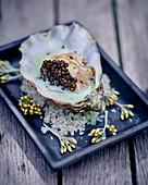 Auster mit Kaviar