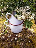 Flowering service tree twigs in enamel pots