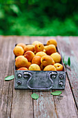 Apricots in a metal vintage box on an old table in the garden