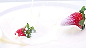 Frische Erdbeeren fallen in Milch