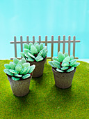 'Succulent garden' - succulent cake