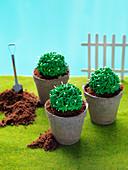 'Succulent garden' - round cactus cake