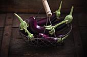 Finger aubergine Hansel F1 (Solanum melongena Hänsel F1) in a wire basket