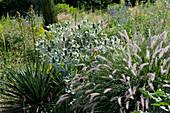 Trockenheitsverträgliches Beet im Naturgarten: Palmlilie, Alpenmannstreu 'Silverado' und Federborstengras