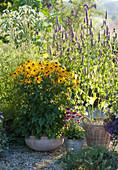 Topf Arrangement mit Sonnenhut 'Goldsturm', Duftnessel, Scheinsonnenhut 'Butterfly Kisses' und Wiesenknopf 'White Tanna'