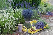 Beet mit weißem und blauem Lavendel, frisch geschnitten auf Holztablett und als Stehstrauß