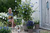 Terrasse mit blühender Bleiwurz, Mehlsalbei, Prachtkerze, Flammenblume und Salbei-Hybride 'Sky Blue', Frau liest, Hund Zula liegt