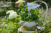 Schale mit Basilikum und Blüten vom Giersch als Wegweiser zum White Dinner