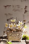 Gesteck mit Christrosen-Blüten und Islandmoos in Jardiniere