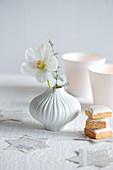 Christrosen-Blüte und Zierspargel in Vase