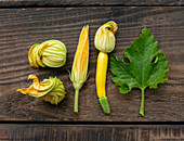 Various fresh zucchini flowers next to a zucchini leaf on a wooden background