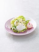 Mozzarelline im Salatblatt mit Sprossen und Radieschen
