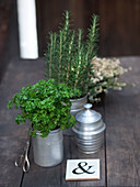Herb pots: parsley and rosemary