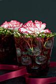 Nelken-Blüten mit Knospen vom Lorbeerschneeball in Gläschen