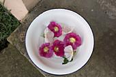 Lila und weiße Blüten von Stockrose in weißer Schale