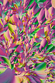 Essential amino acids, polarised light micrograph