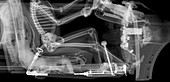 Skeleton driver in car, X-ray