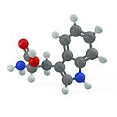 Tryptophan molecule, illustration