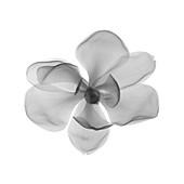 Magnolia, X-ray