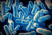 Salmonella bacteria, illustration