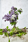 A bunch of lilac and fruit blossom