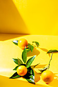 Fresh orange fruits with orange tree leaves on yellow background