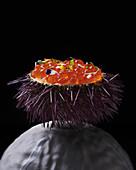 Sea urchins with salmon caviar