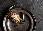 Crab on a metal plate on dark background
