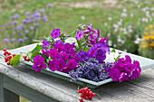 Stilleben aus frisch geschnittenen Blüten von Flammenblumen und Lavendel mit roten Johannisbeeren