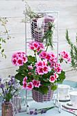 Stehende Geranie 'Flower Fairy Pink' in Korbgestell, Zweige von Rosmarin und Thymian, Sträußchen aus Schnittlauch, Schleifenblume und Glockenblume