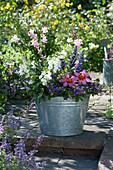 Fächerblume 'Violet Blue', Dahlie 'Happy Single Wink', Engelsgesicht 'Carrara', Prachtkerze 'Freefolk Rosy' und Mehlsalbei in Zink-Kübel