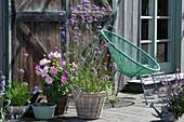 Bienenfreundliche Terrasse mit Dahlie, Berglauch und Eisenkraut und Acapulco-Chair