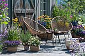 Insektenfreundliche Terrasse mit blühendem Basilikum, Scheinsonnenhut, Malve, Fächerblume 'Violet Blue', Zweizahn 'Bee White', Rosmarin und Sitzgruppe