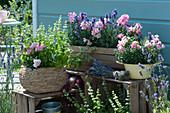 Bienenfreundliches Arrangement mit Lavendel, Löwenmäulchen und blühendem Basilikum