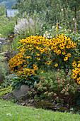 Gelber Sonnenhut 'Goldsturm' 'Little Goldstar', Wolfsmilch und Chinaschilf, Naturstein